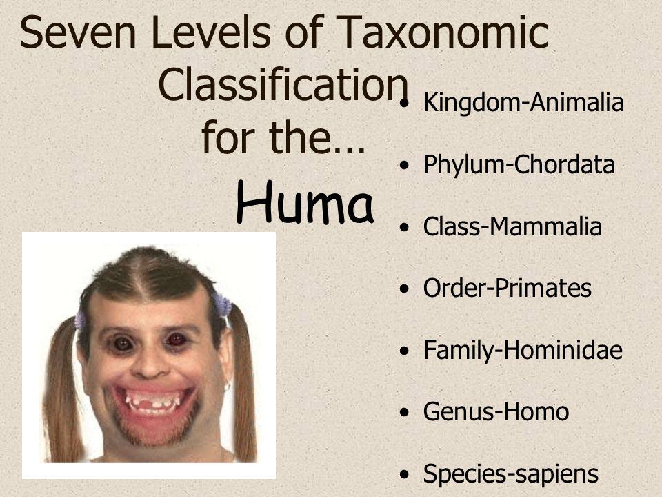 Seven Levels of Taxonomic Classification for the… Kingdom-Animalia Phylum-Chordata Class-Mammalia Order-Primates Family-Hominidae Genus-Homo Species-s