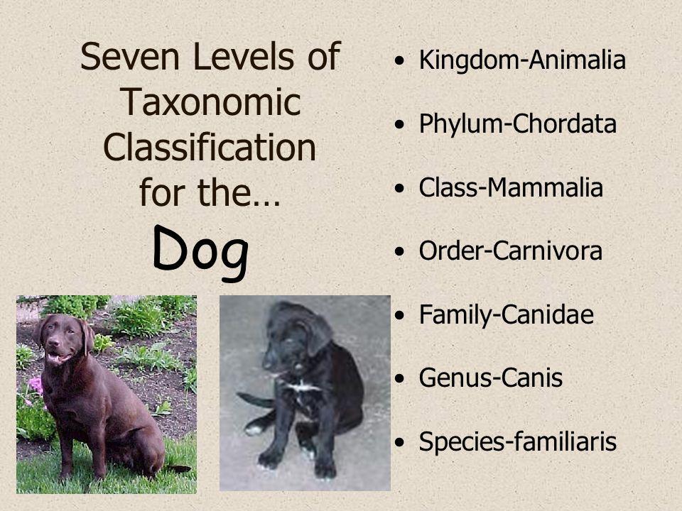 Seven Levels of Taxonomic Classification for the… Kingdom-Animalia Phylum-Chordata Class-Mammalia Order-Carnivora Family-Canidae Genus-Canis Species-f