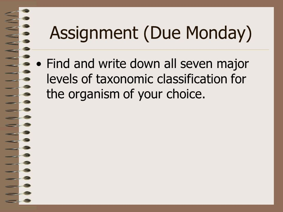 Assignment (Due Monday) Find and write down all seven major levels of taxonomic classification for the organism of your choice.