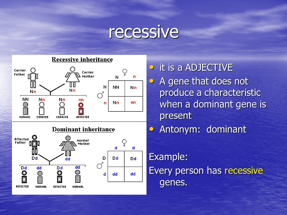 recessive it is a ADJECTIVE it is a ADJECTIVE A gene that does not produce a characteristic when a dominant gene is present A gene that does not produce a characteristic when a dominant gene is present Antonym: dominant Antonym: dominantExample: Every person has recessive genes.