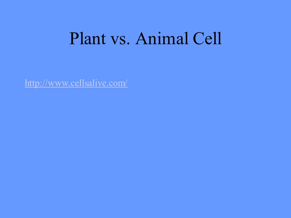Plant vs. Animal Cell http://www.cellsalive.com/