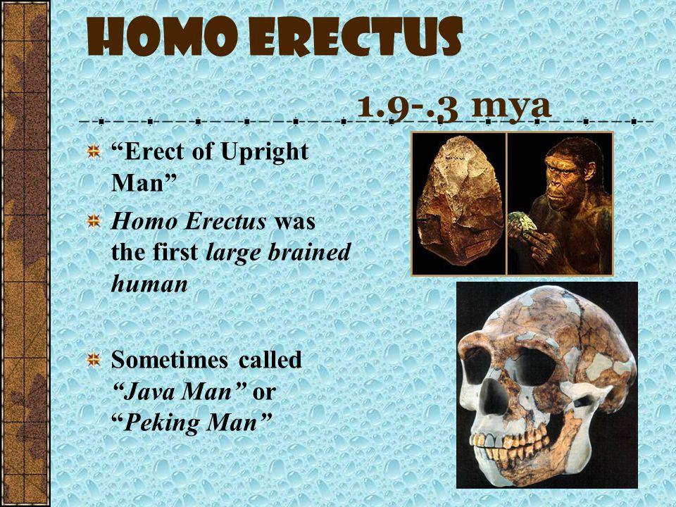 Homo rudolfensis 2.3-1.6 mya & Homo ergaster 1.9-1.6 mya Not much is known about Rudolfensis Homo ergaster is the earlier African only form of Homo er