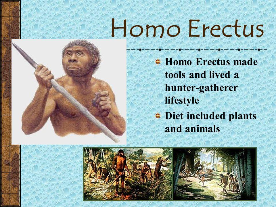 Homo Erectus 1.9-.3 mya Erect of Upright Man Homo Erectus was the first large brained human Sometimes called Java Man orPeking Man