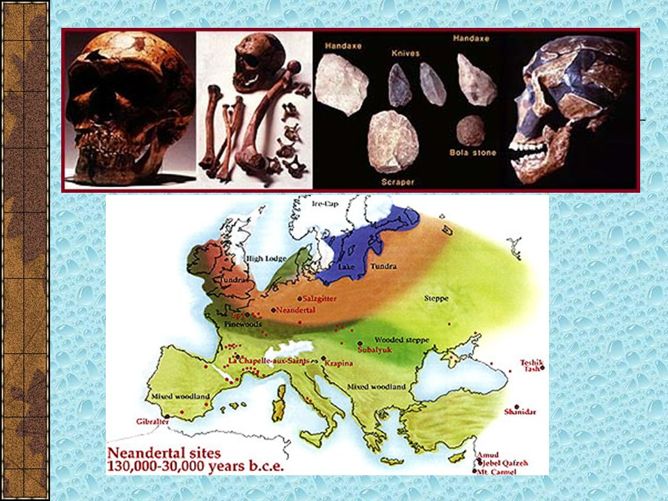 Neanderthal Man Fossilized remains of Neanderthal Man were first found in the Neander Valley of Germany in 1857 Neanderthal man is sometimes referred