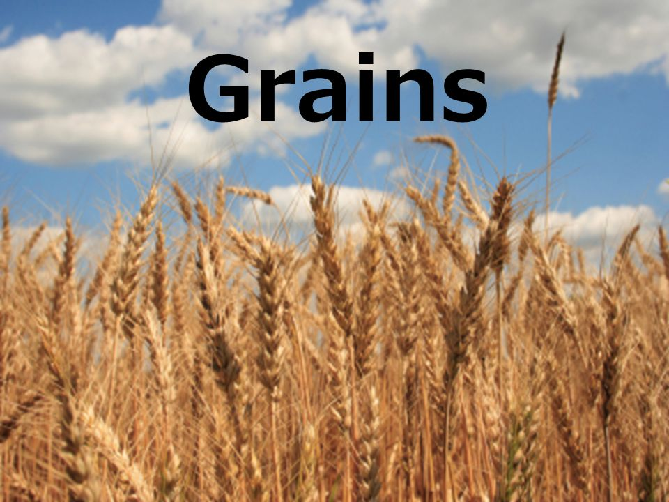 Grain Structure & Nutrients (B.E.G.) Bran The edible, outer protective layer of a seed Great source of fiber & vitamins Endosperm Holds food supply for plant to grow Contains mostly starch & protein Germ Reproductive part of the plant Rich in vitamins, minerals, protein & fat All 3 of these parts = 1 kernel = a whole seed