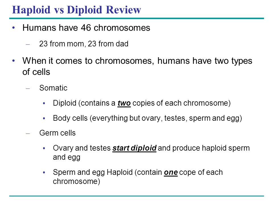 Haploid vs Diploid Review Humans have 46 chromosomes – 23 from mom, 23 from dad When it comes to chromosomes, humans have two types of cells – Somatic