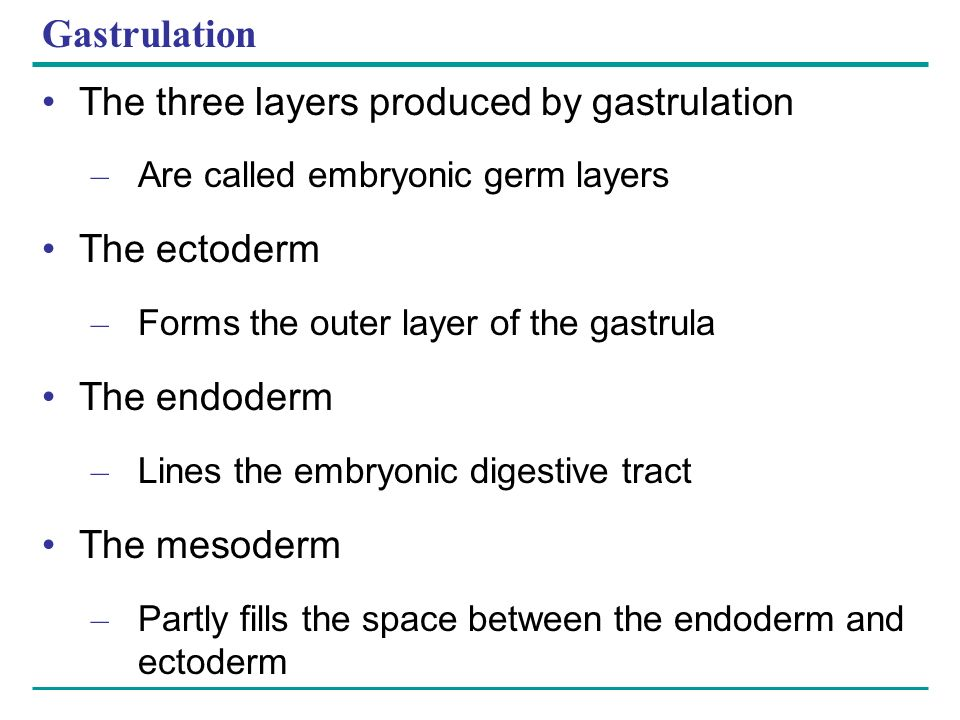Gastrulation The three layers produced by gastrulation – Are called embryonic germ layers The ectoderm – Forms the outer layer of the gastrula The end