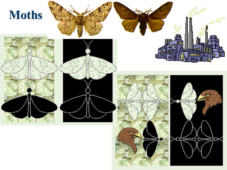 Social Darwinism A perversion of Charles Darwins On the Origin of Species His ideas were applied to business. (It wasnt what he had in mind.) The Moth