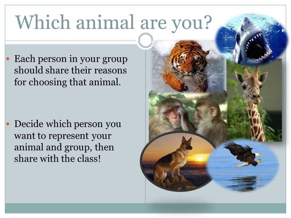 Which animal are you.