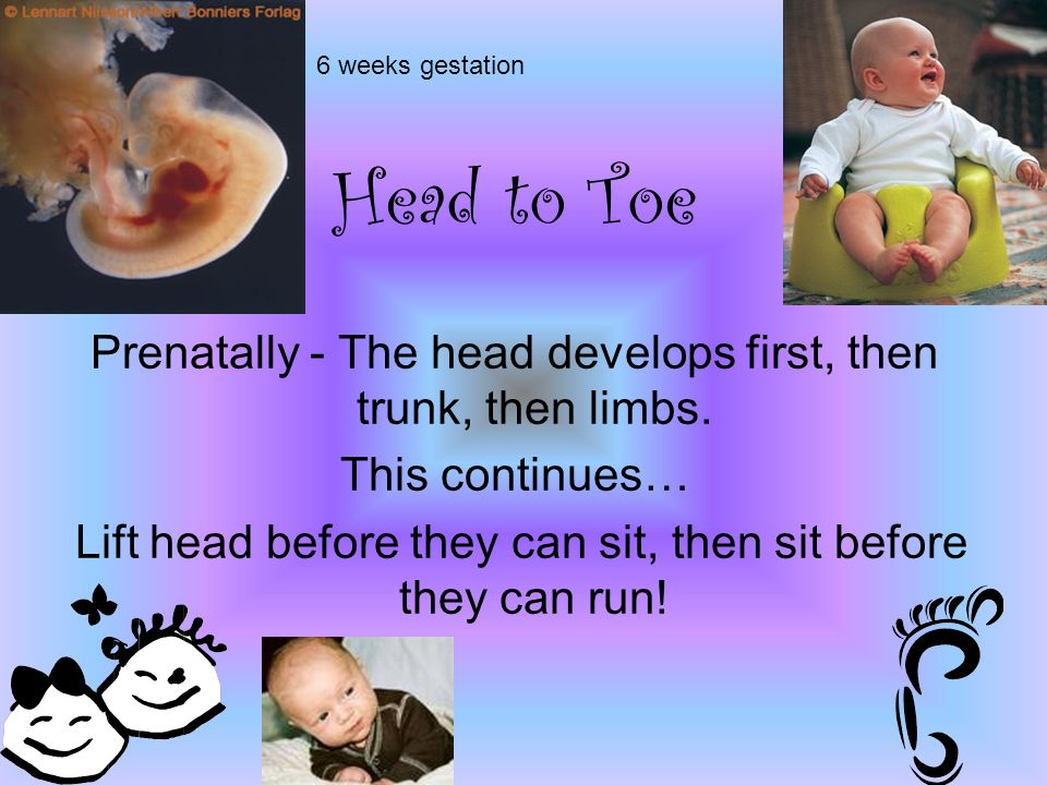 Head to Toe Prenatally - The head develops first, then trunk, then limbs.
