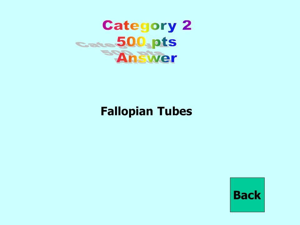 Fallopian Tubes Back