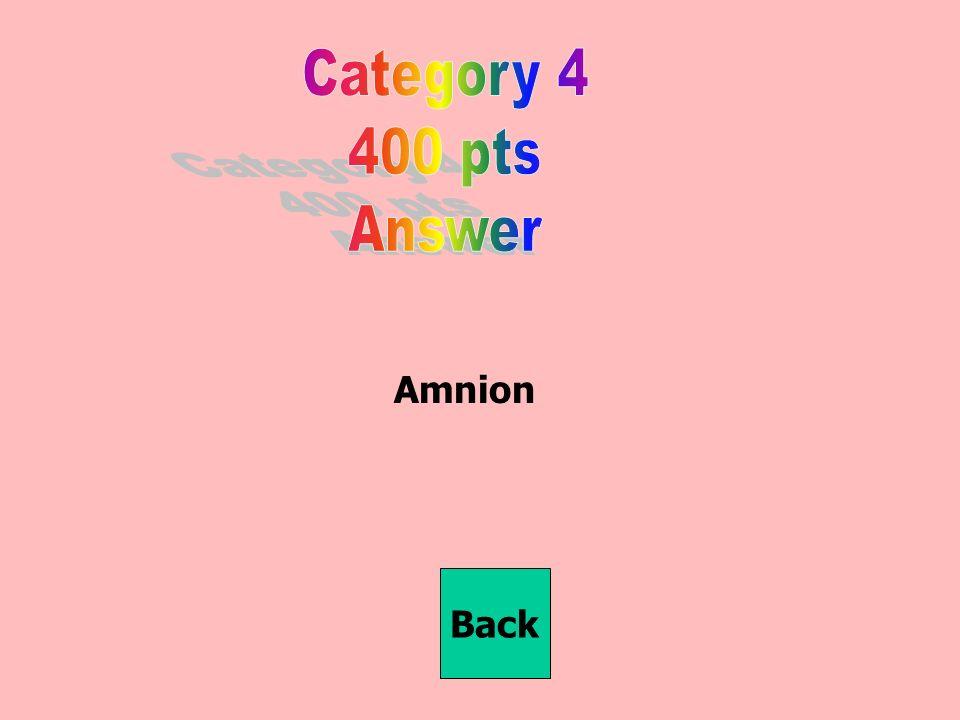 Amnion Back