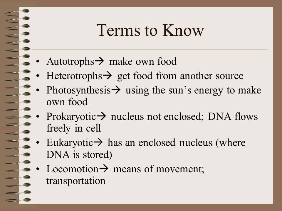 Invertebrate Classes