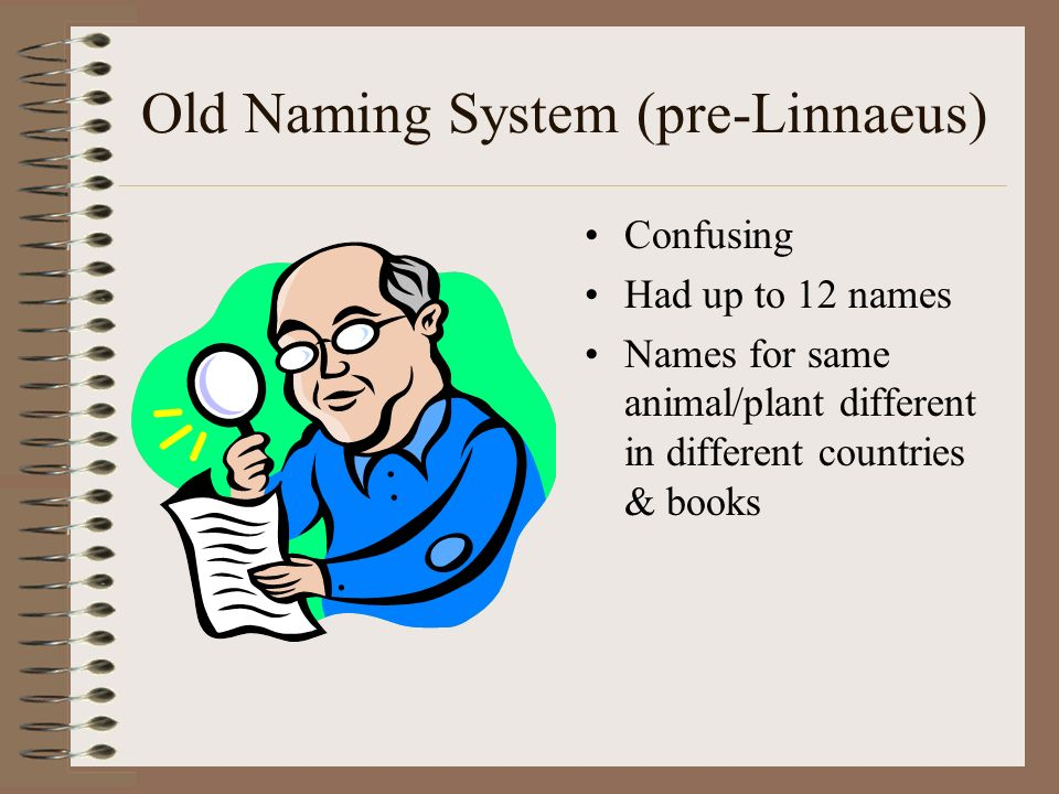 History 1600s began to classify according to similarities in form (structure) 1700s Carolus Linnaeus (Swedish) –Created system used today –Used system