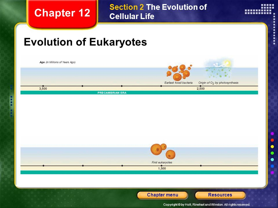Copyright © by Holt, Rinehart and Winston. All rights reserved. ResourcesChapter menu Evolution of Eukaryotes Section 2 The Evolution of Cellular Life