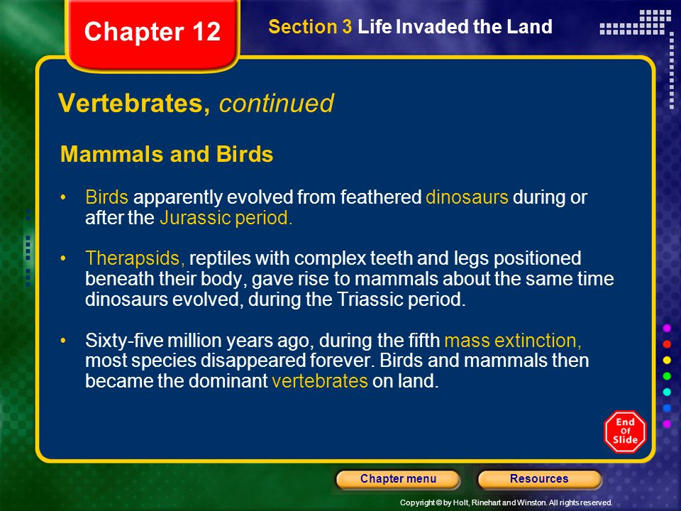 Copyright © by Holt, Rinehart and Winston. All rights reserved. ResourcesChapter menu Vertebrates, continued Mammals and Birds Birds apparently evolve