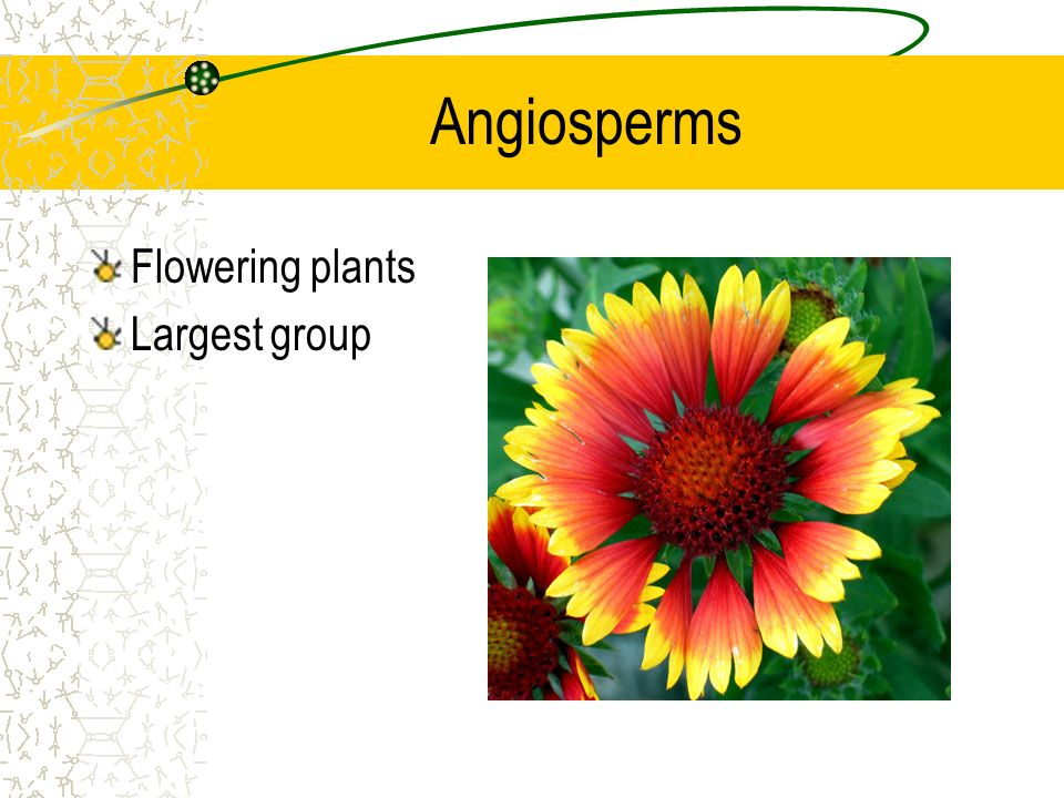 Angiosperms Flowering plants Largest group