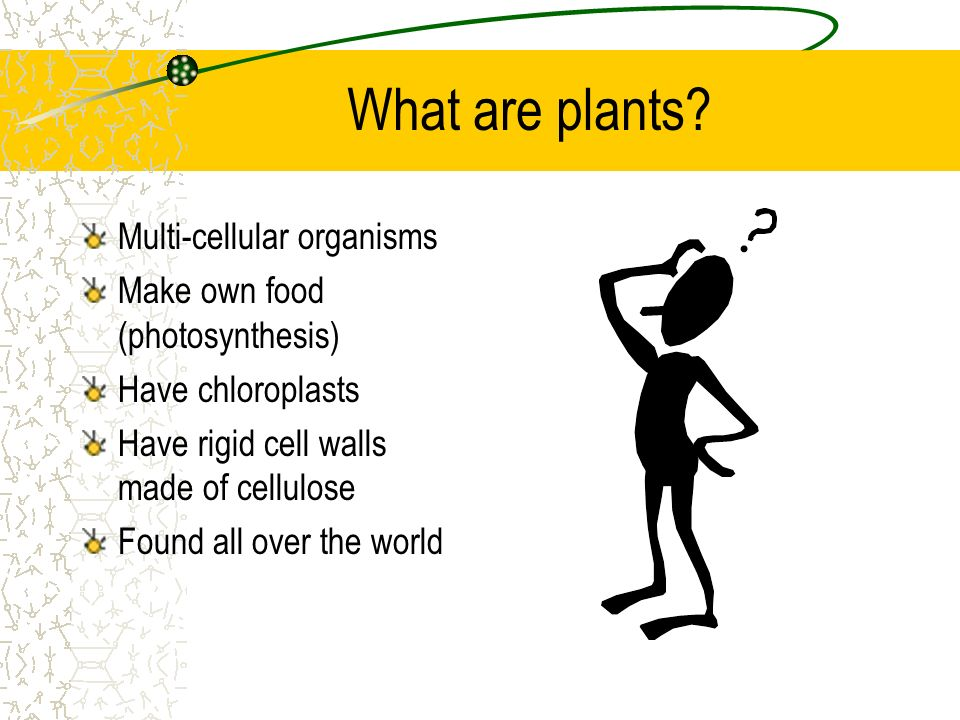 What are plants? Multi-cellular organisms Make own food (photosynthesis) Have chloroplasts Have rigid cell walls made of cellulose Found all over the