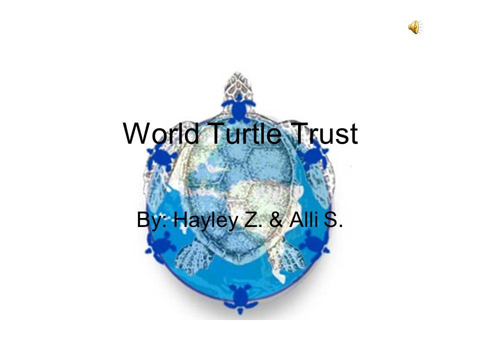 World Turtle Trust By: Hayley Z. & Alli S.