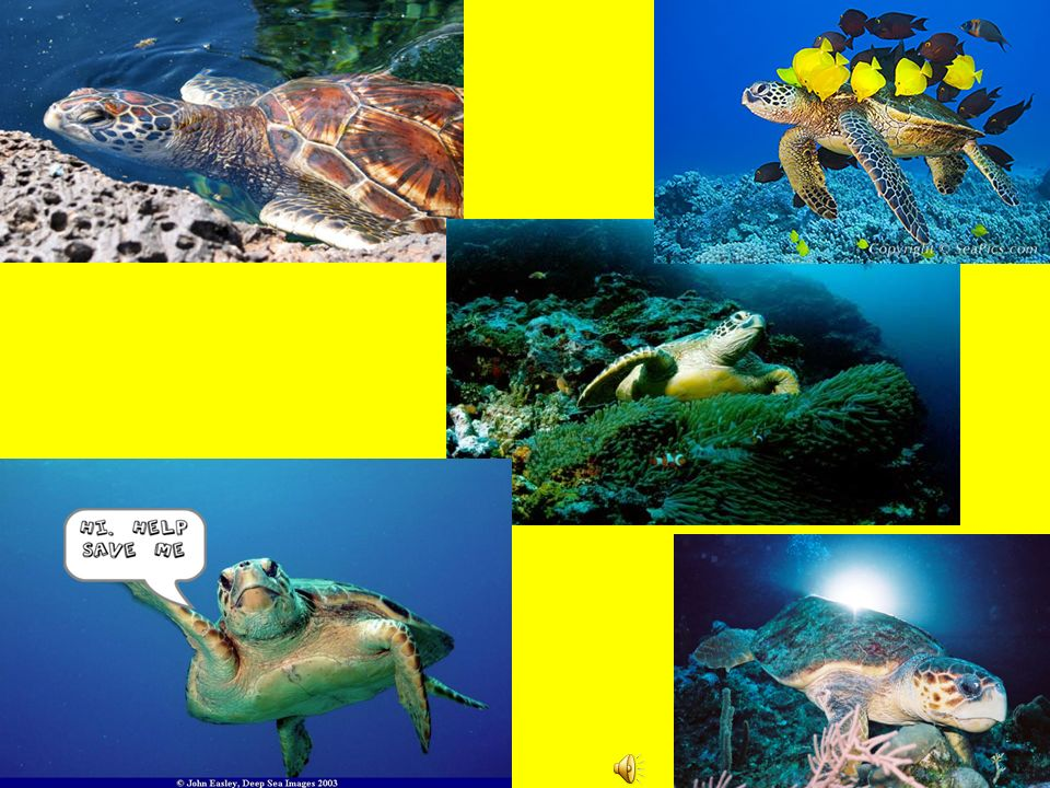 Why Donate. Why not. It will provide education to people all across the world on sea turtles.