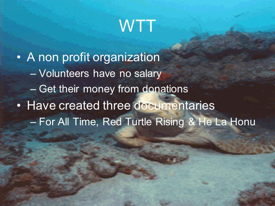 WTT A non profit organization –Volunteers have no salary –Get their money from donations Have created three documentaries –For All Time, Red Turtle Rising & He La Honu