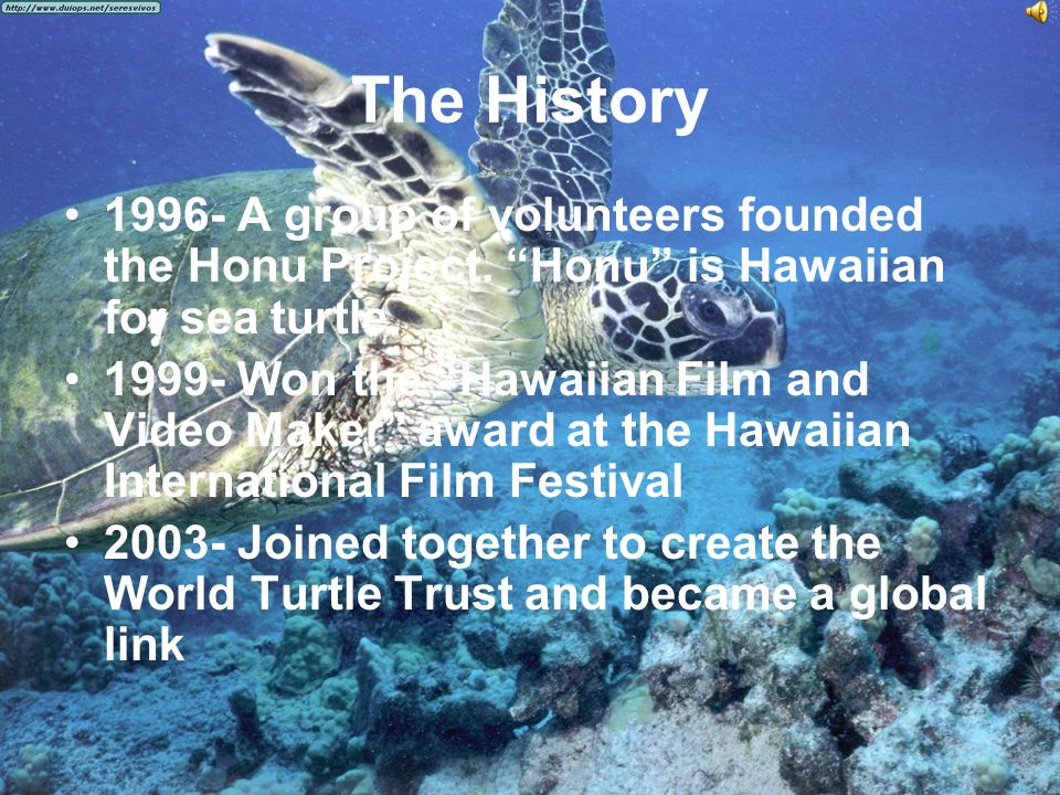 The History 1996- A group of volunteers founded the Honu Project.
