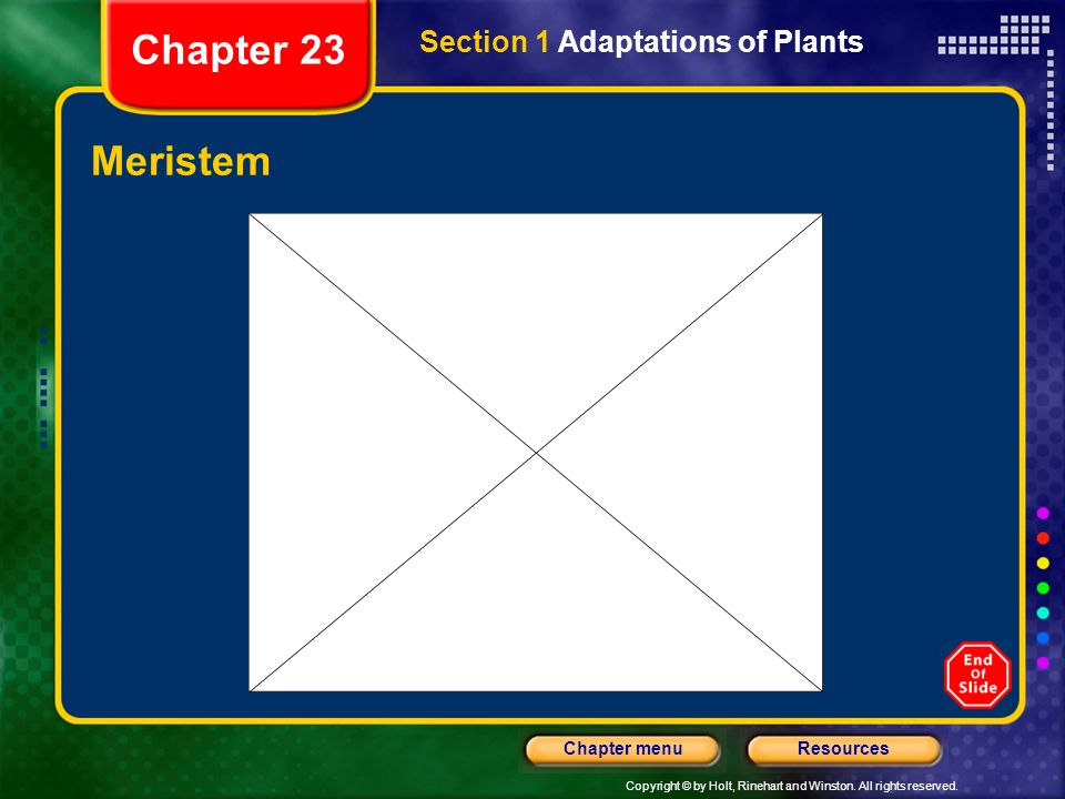 Copyright © by Holt, Rinehart and Winston. All rights reserved. ResourcesChapter menu Meristem Section 1 Adaptations of Plants Chapter 23