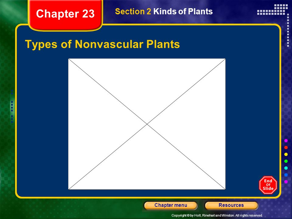Copyright © by Holt, Rinehart and Winston. All rights reserved. ResourcesChapter menu Types of Nonvascular Plants Section 2 Kinds of Plants Chapter 23