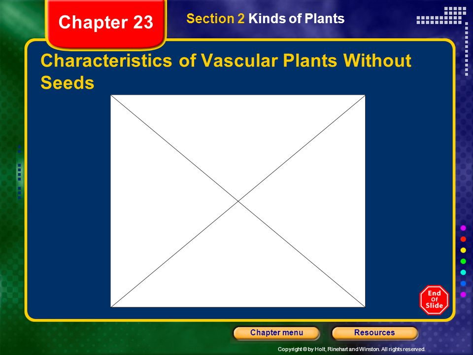 Copyright © by Holt, Rinehart and Winston. All rights reserved. ResourcesChapter menu Characteristics of Vascular Plants Without Seeds Section 2 Kinds