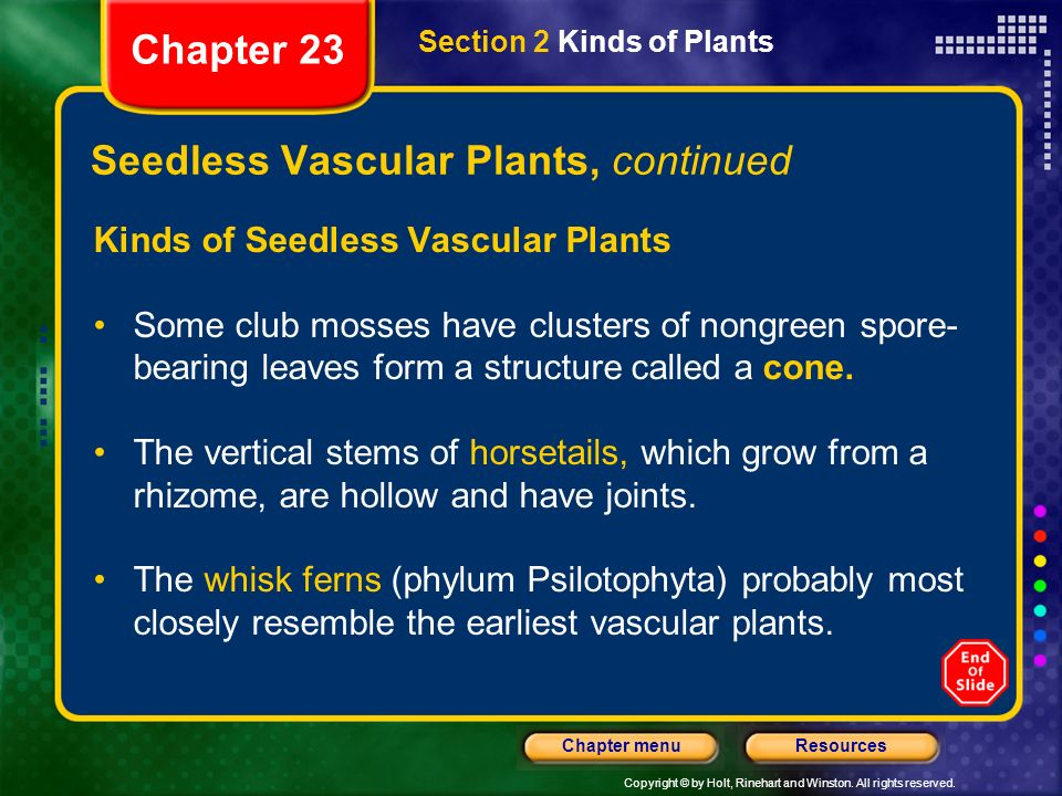 Copyright © by Holt, Rinehart and Winston. All rights reserved. ResourcesChapter menu Seedless Vascular Plants, continued Kinds of Seedless Vascular P