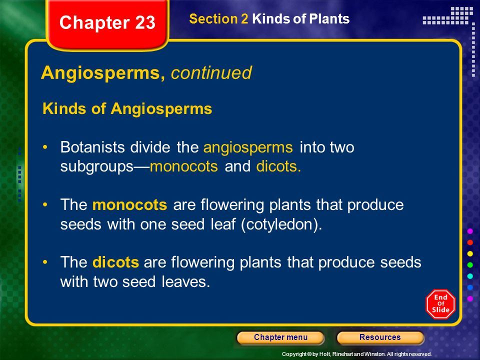 Copyright © by Holt, Rinehart and Winston. All rights reserved. ResourcesChapter menu Angiosperms, continued Kinds of Angiosperms Botanists divide the