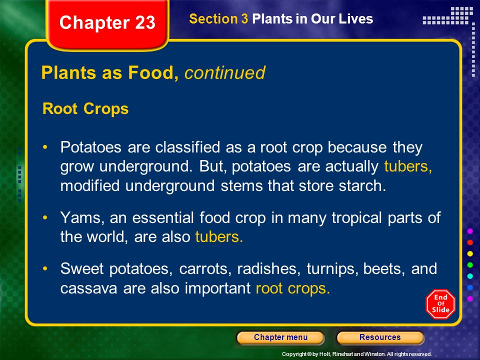 Copyright © by Holt, Rinehart and Winston. All rights reserved. ResourcesChapter menu Plants as Food, continued Root Crops Potatoes are classified as