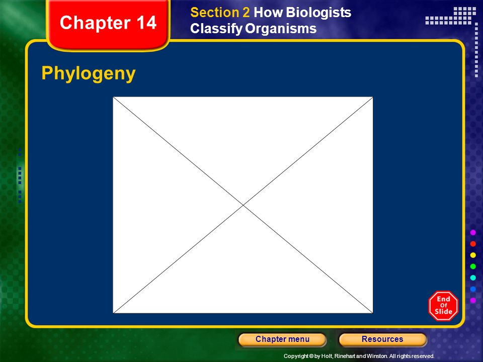 Copyright © by Holt, Rinehart and Winston. All rights reserved. ResourcesChapter menu Phylogeny Section 2 How Biologists Classify Organisms Chapter 14