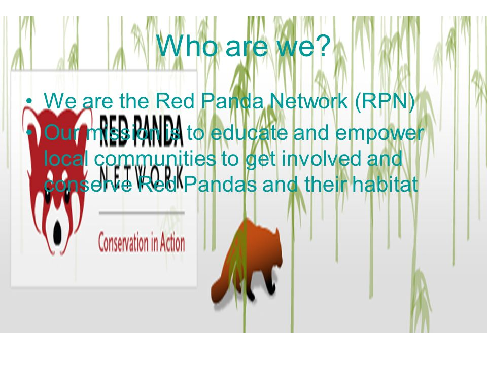 Current conservation The RPN is currently saving Red Pandas and their habitats in the wild.