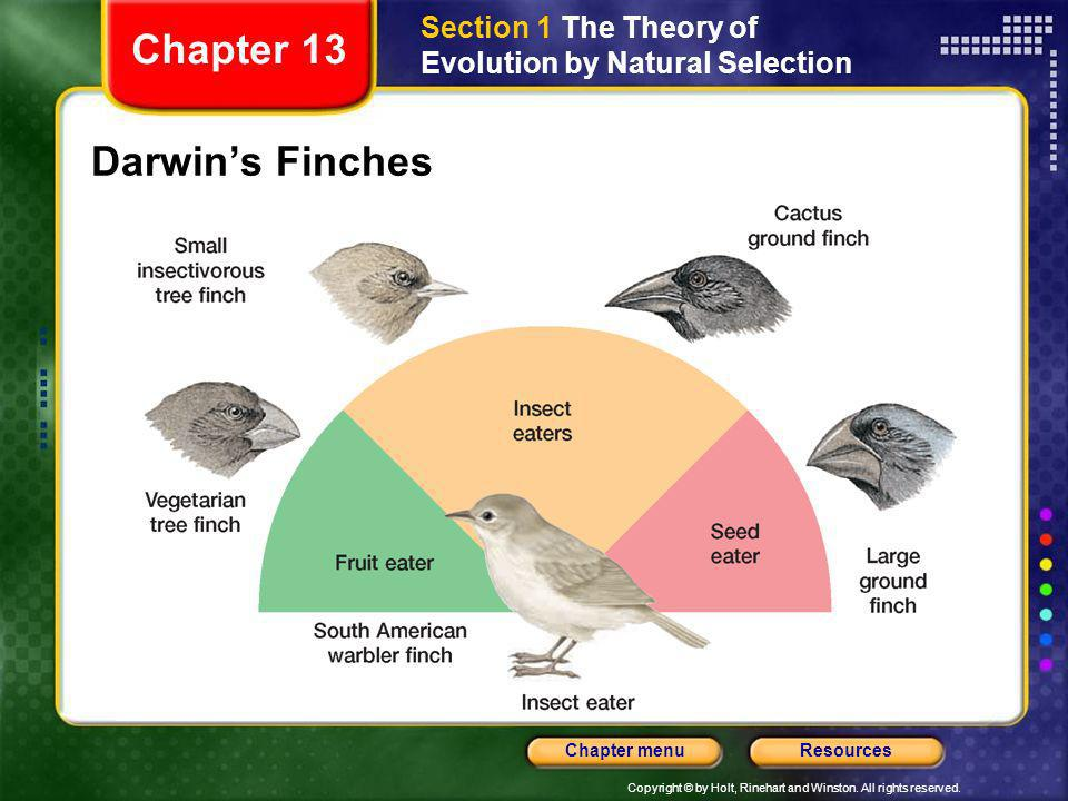 Copyright © by Holt, Rinehart and Winston. All rights reserved. ResourcesChapter menu Darwins Finches Section 1 The Theory of Evolution by Natural Sel