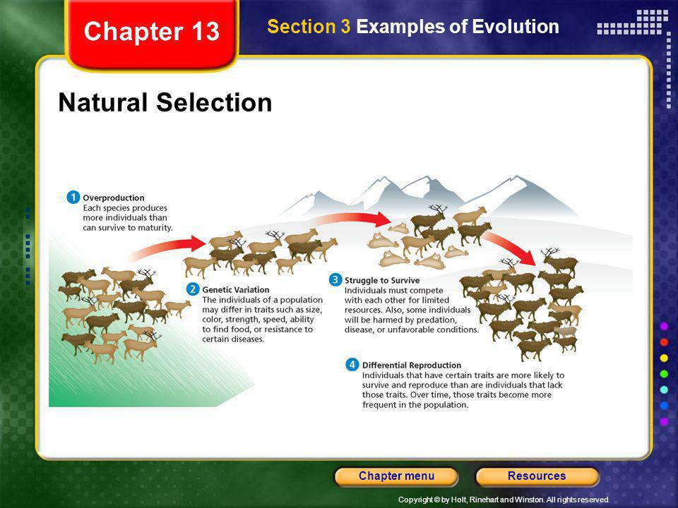 Copyright © by Holt, Rinehart and Winston. All rights reserved. ResourcesChapter menu Natural Selection Section 3 Examples of Evolution Chapter 13