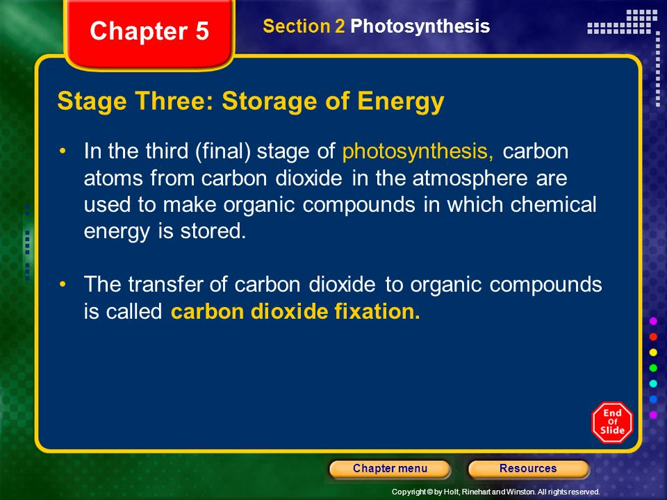 Copyright © by Holt, Rinehart and Winston. All rights reserved. ResourcesChapter menu Stage Three: Storage of Energy In the third (final) stage of pho
