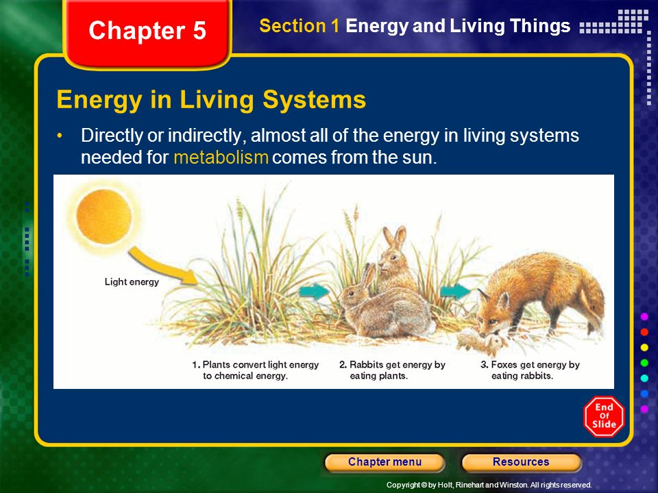 Copyright © by Holt, Rinehart and Winston. All rights reserved. ResourcesChapter menu Energy in Living Systems Directly or indirectly, almost all of t