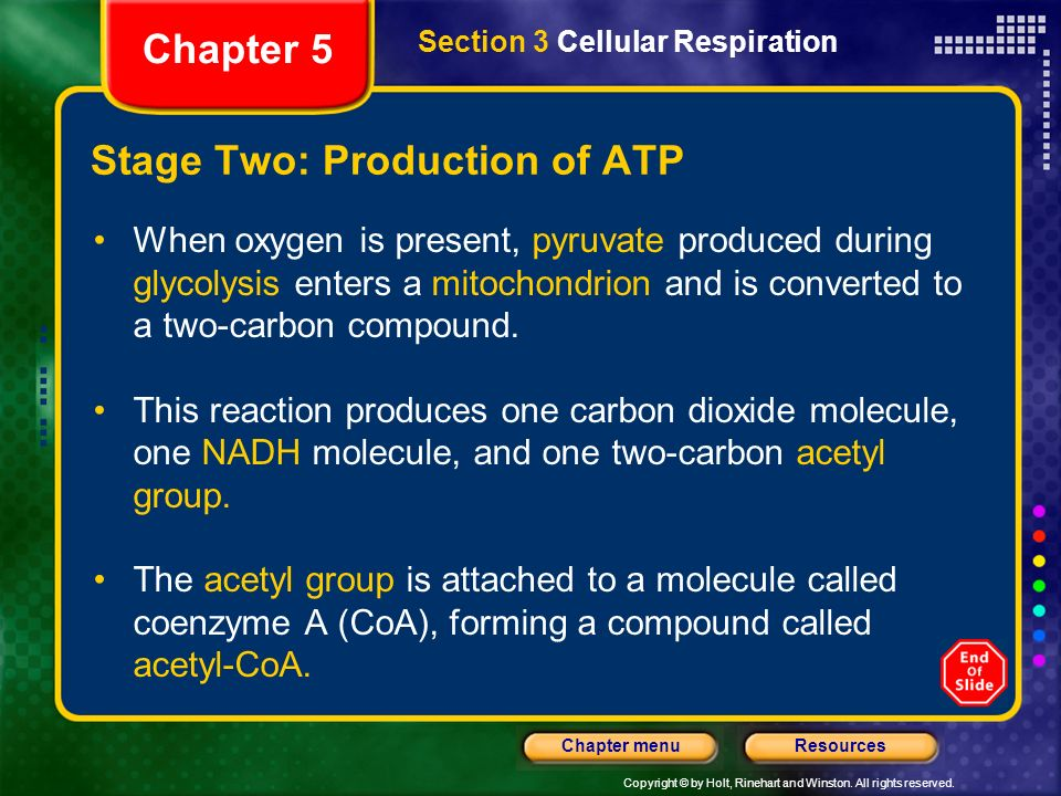 Copyright © by Holt, Rinehart and Winston. All rights reserved. ResourcesChapter menu Stage Two: Production of ATP When oxygen is present, pyruvate pr
