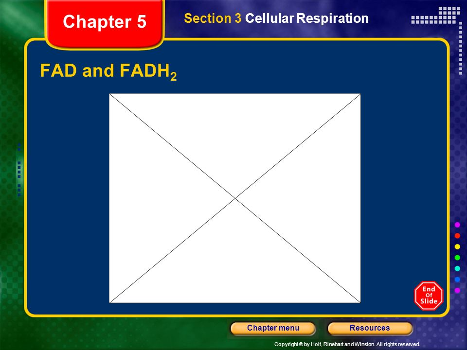 Copyright © by Holt, Rinehart and Winston. All rights reserved. ResourcesChapter menu FAD and FADH 2 Section 3 Cellular Respiration Chapter 5