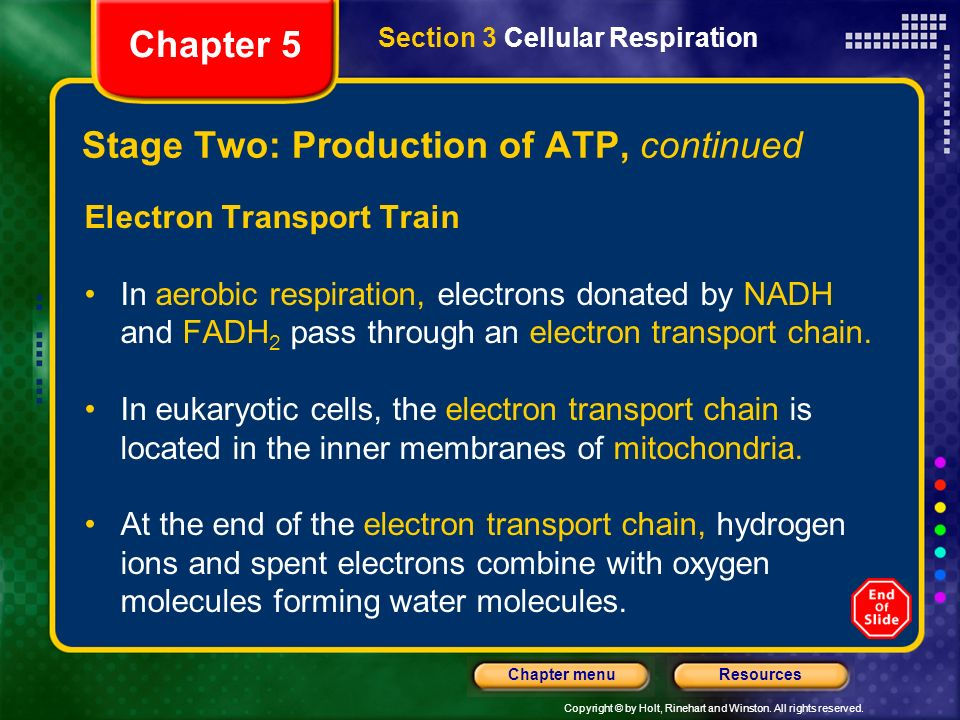 Copyright © by Holt, Rinehart and Winston. All rights reserved. ResourcesChapter menu Stage Two: Production of ATP, continued Electron Transport Train