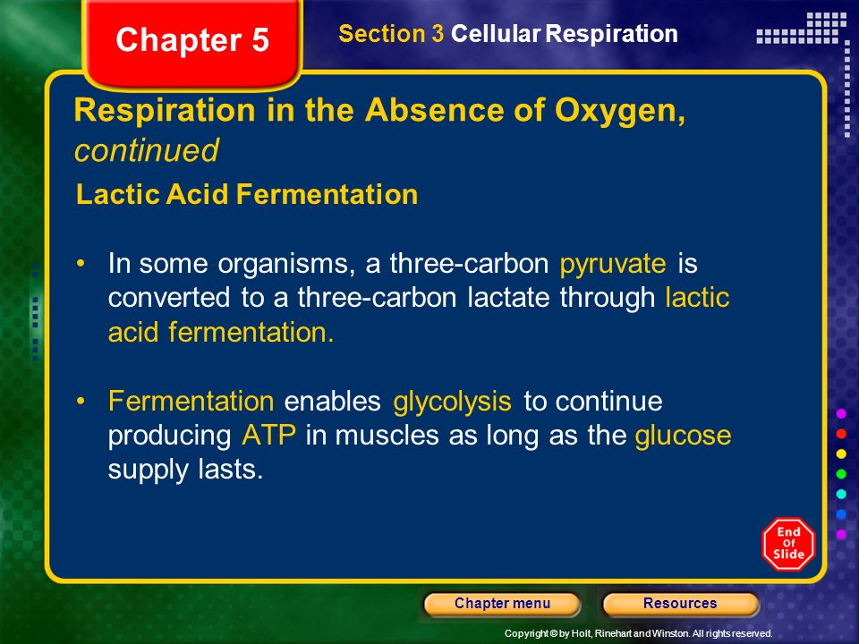 Copyright © by Holt, Rinehart and Winston. All rights reserved. ResourcesChapter menu Respiration in the Absence of Oxygen, continued Lactic Acid Ferm