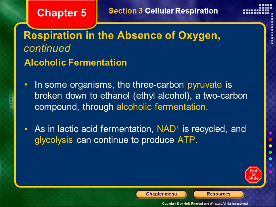Copyright © by Holt, Rinehart and Winston. All rights reserved. ResourcesChapter menu Respiration in the Absence of Oxygen, continued Alcoholic Fermen