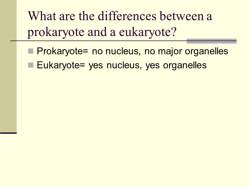 What are the differences between a prokaryote and a eukaryote? Prokaryote= no nucleus, no major organelles Eukaryote= yes nucleus, yes organelles