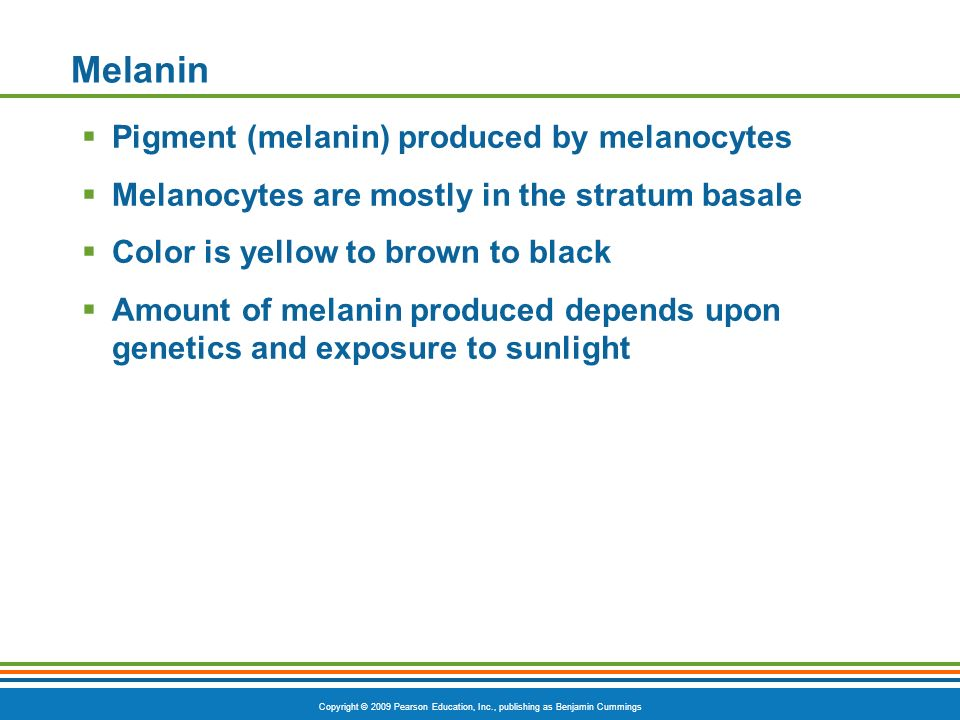 Copyright © 2009 Pearson Education, Inc., publishing as Benjamin Cummings Melanin Pigment (melanin) produced by melanocytes Melanocytes are mostly in the stratum basale Color is yellow to brown to black Amount of melanin produced depends upon genetics and exposure to sunlight