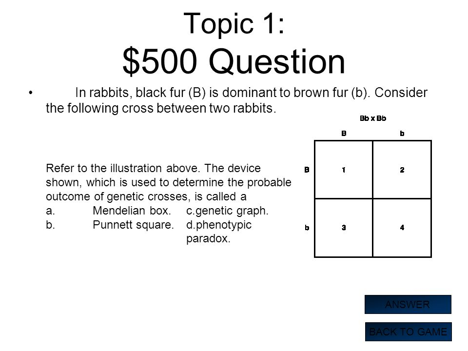 Topic 1: $500 Question In rabbits, black fur (B) is dominant to brown fur (b). Consider the following cross between two rabbits. BACK TO GAME ANSWER R