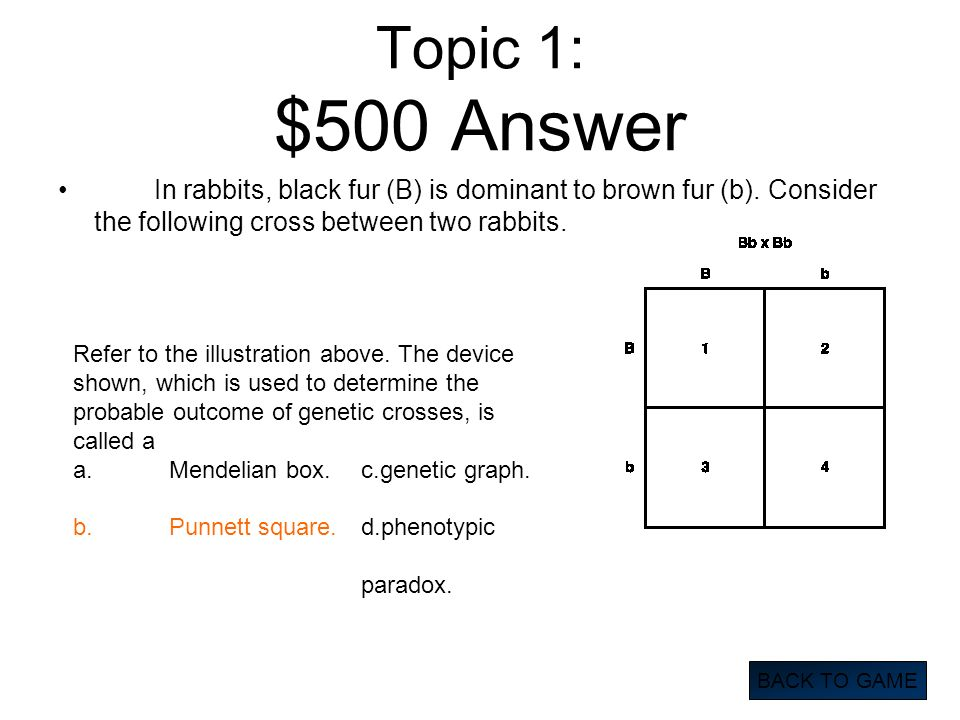Topic 1: $500 Answer In rabbits, black fur (B) is dominant to brown fur (b). Consider the following cross between two rabbits. BACK TO GAME Refer to t