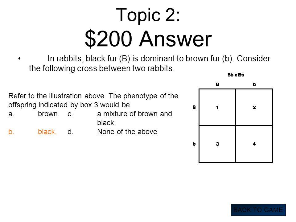 Topic 2: $200 Answer In rabbits, black fur (B) is dominant to brown fur (b). Consider the following cross between two rabbits. BACK TO GAME Refer to t
