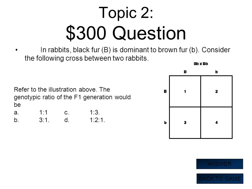 Topic 2: $300 Question In rabbits, black fur (B) is dominant to brown fur (b). Consider the following cross between two rabbits. BACK TO GAME ANSWER R