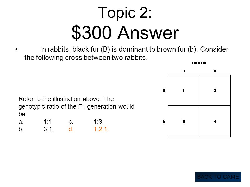 Topic 2: $300 Answer In rabbits, black fur (B) is dominant to brown fur (b). Consider the following cross between two rabbits. BACK TO GAME Refer to t